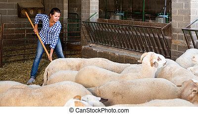 Portrait of female farmer feeding sheeps on farm. High quality photo