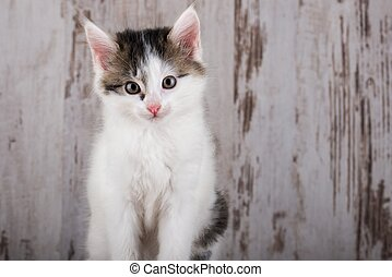 Portrait of few weeks old white-tabby kitten on white wooden background
