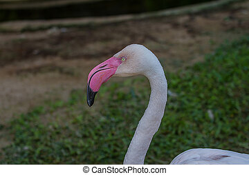 portrait of flamingo bird