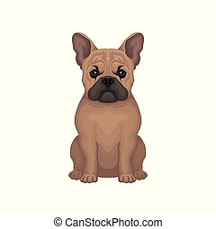 Portrait of French Bulldog. Small breed of domestic dog with wrinkled muzzle and short brown coat. Detailed flat vector icon