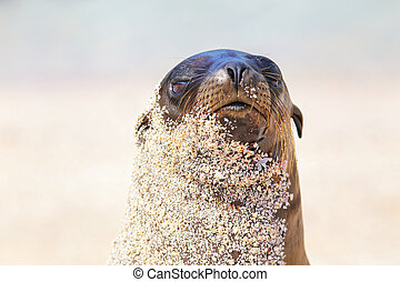 Portrait of Galapagos sea lion on Espanola Island, Galapagos...