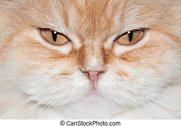portrait of ginger cat close up