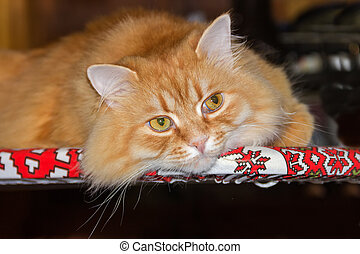 Portrait of ginger cat on textile surface in calm state