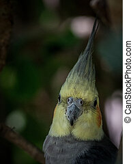 portrait of gray parrot with yellow head
