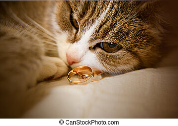 cat is lying next to wedding rings - Portrait of green-eyed...