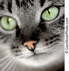 green-eyed cat - portrait of green-eyed cat
