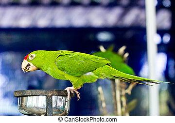portrait of green parrot bird