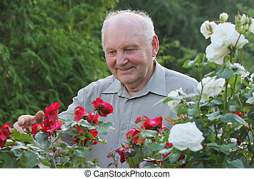Portrait of grower of roses - Portrait of old man - grower...