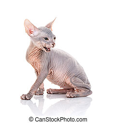 Six funny hairless kittens with ball brood of canadian