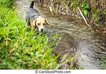 Portrait of happy cute beagle dog in tropical nature. Bali island.