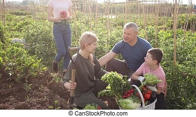 Portrait of happy friendly family with two teen children discussing good crop of vegetables in garden on sunny summer day. High quality FullHD footage