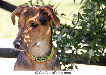 portrait of happy mongrel dog in spring