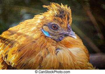 Portrait of Hen