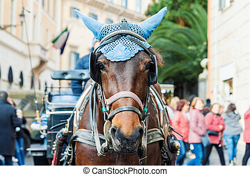 Portrait of horse-drawn carriage horse with decorated head