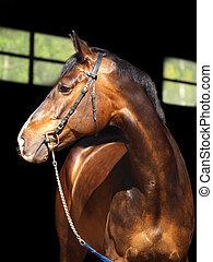 portrait of horse in dark