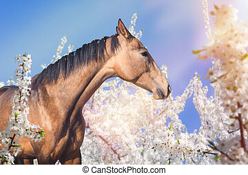 Portrait of horse on spring blossom background