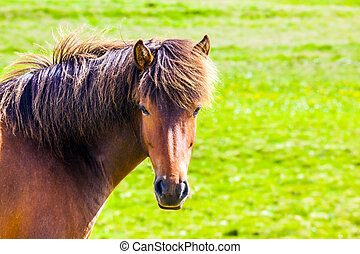 Portrait of horse with braun mane - Portrait of a ...