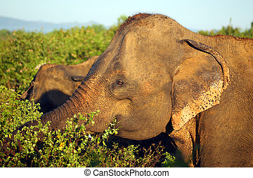 indian elephant in jungle