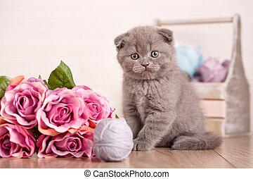 Portrait of Interesting Scottish kitten with flower