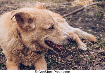 portrait of laying on the ground senior dog