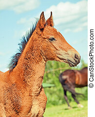portrait of little foal.