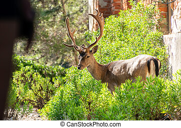 Portrait of majestic powerful young red deer stag in nature