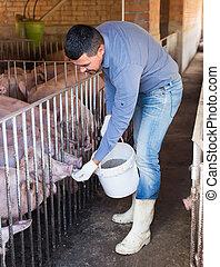 Portrait of male farmer feeding domestic pigs with all-mash forage on farm