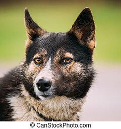 Portrait Of Medium Size Mixed Breed Dog