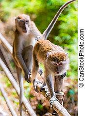 portrait of monkeys in a rain forest on a wooden fence