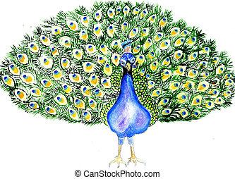 Portrait of Peacock
