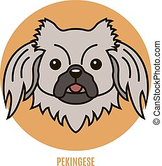 Portrait of Pekingese