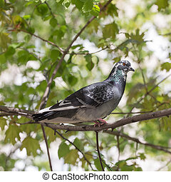 pigeon on a tree branch