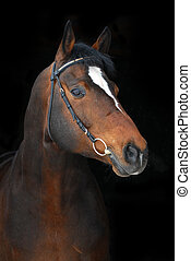 PORTRAIT OF PROUD BAY HORSE ON THE BLACK - Portrait of proud...