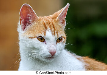 Cute red white cat portrait on nature blurred background. Portrait of white ginger cat. Cat is small domesticated carnivorous mammal with soft fur.