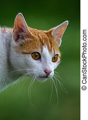 Cute red white cat portrait on nature green blurred background. Portrait of white ginger cat. Cat is small domesticated carnivorous mammal with soft fur.