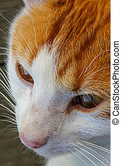 Cute red white cat portrait. Portrait of ginger white cat. Cat is small domesticated carnivorous mammal with soft fur.