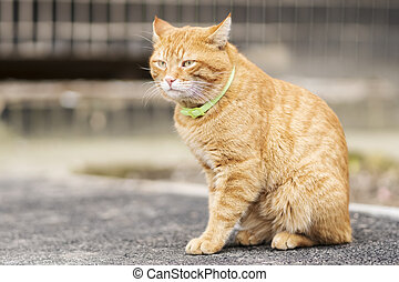 Portrait of red cat with a collar