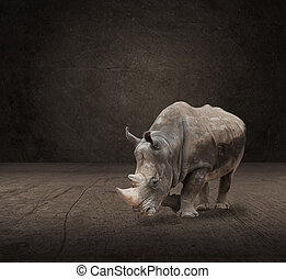 Portrait Of Rhinoceros