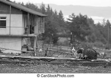 Portrait of sad cat looking at the camera