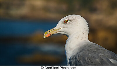 Portrait of seagull at the Boca do Inferno rock, Cascais, Portugal