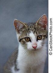 Portrait of small kitten