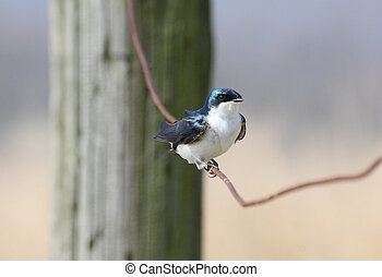 portrait of songbird on a wire fence