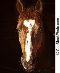 portrait of sorrel horse in dark