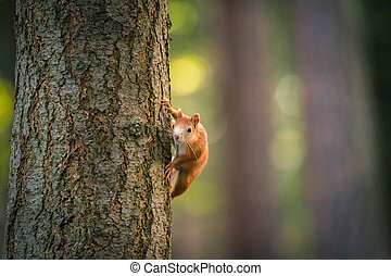 Portrait of squirrel on the tree trunk. Wildlife Concepts. Photography of wild animal playing with photographer and posing.