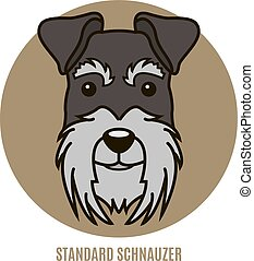 Portrait of Standard Schnauzer. Vector illustration in style...