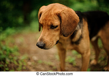 Portrait of standing brown puppy in a forest