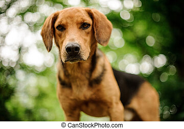 Portrait of standing brown puppy in forest