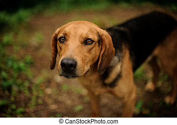 Portrait of standing brown puppy in the forest