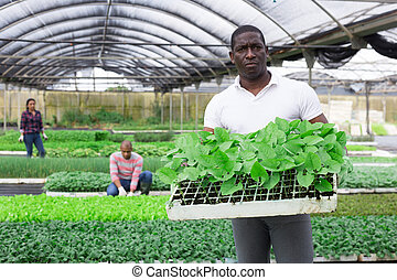 Portrait of successful farmer caring for sprouts of various greenhouse crops