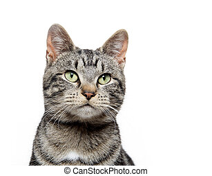 portrait of tabby cat